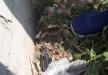 العثور على بندقية كارلو في منطقة مفتوحة بمدينة باقة الغربية
