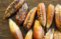 نواة التمر.. غذاء مفيد ودواء سحري في رمضان