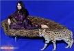 شيراز تتعرض لتوتّر سببه الهرّ الفارسي الشيرازي