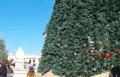 اعادة ترميم شجرة الميلاد في سخنين