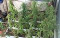 من الطيبة واماكن أخرى: القاء القبض على 7 مشتبهين بترويج المخدرات