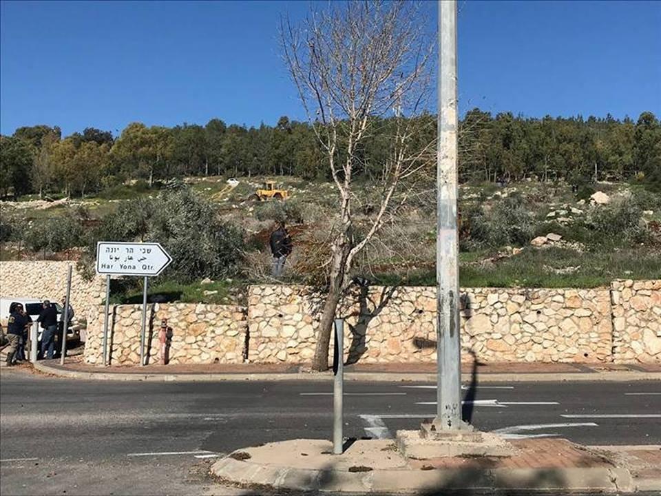 تجريف أراض واقتلاع أشجار زيتون في قرية عين ماهل
