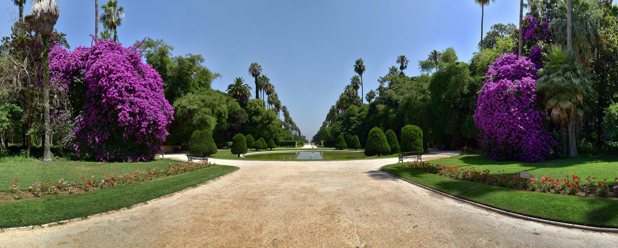 ثالث أكبر حديقة بالعالم..عربية تسلق طرزان أغصانها