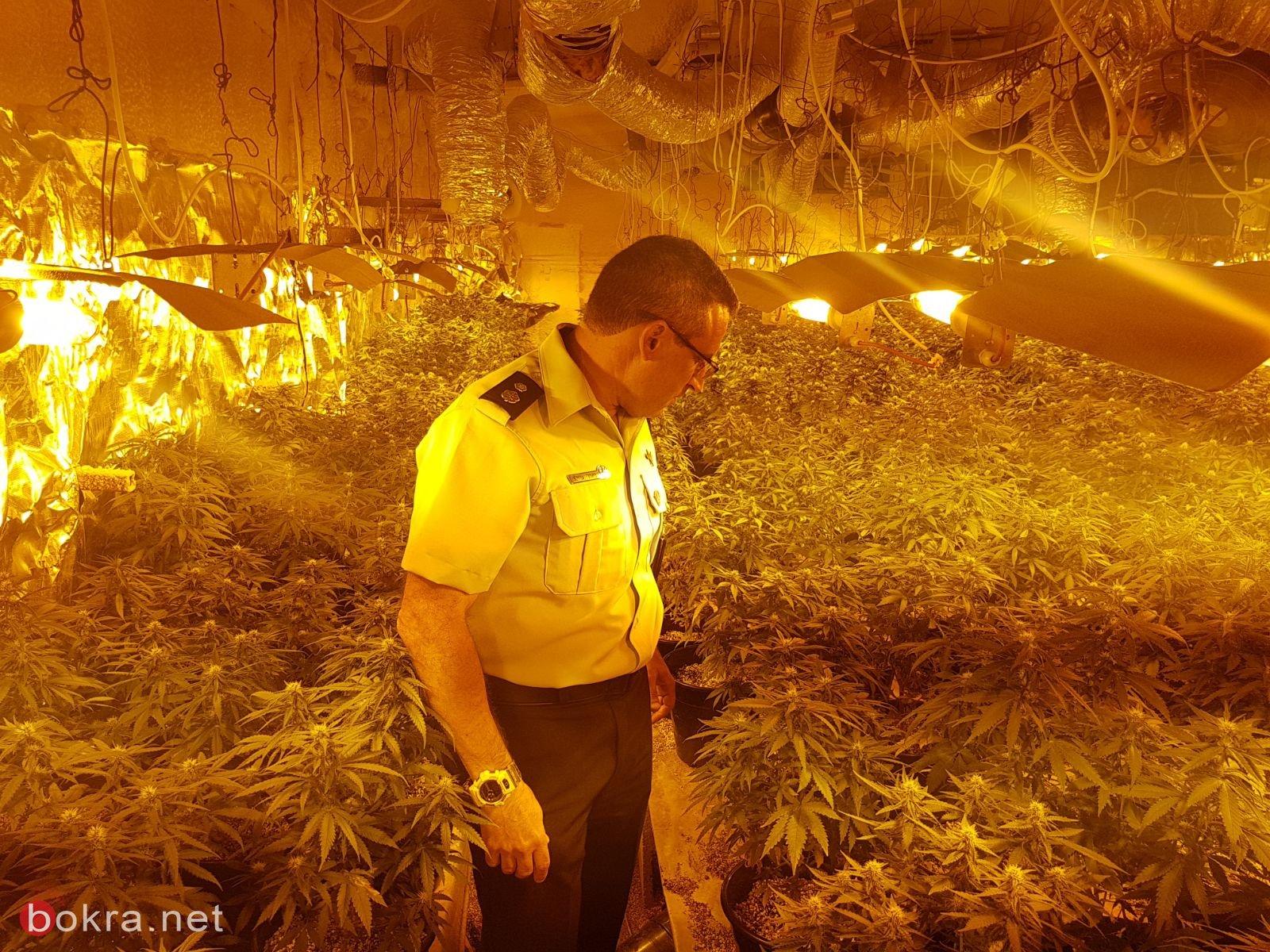 الشرطة تضبط 50 كغم من المريحوانة و1000 نبتة مخدرة لمشتبهين من عكا