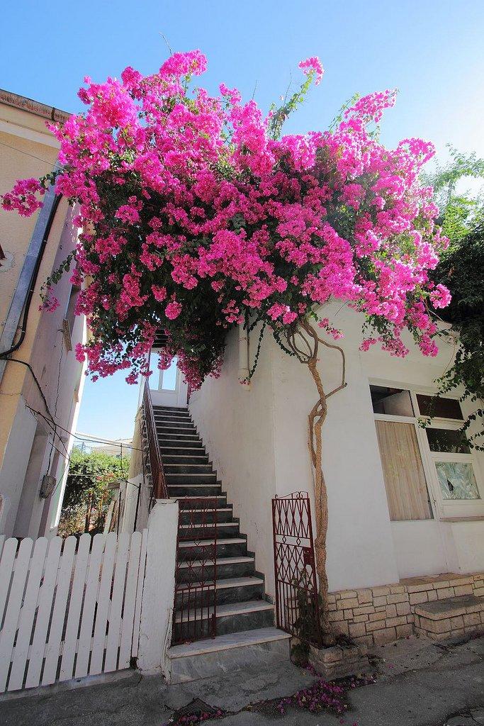 تعرفوا على باكسوس الجزيرة اليونانية الهادئة! 1700552283