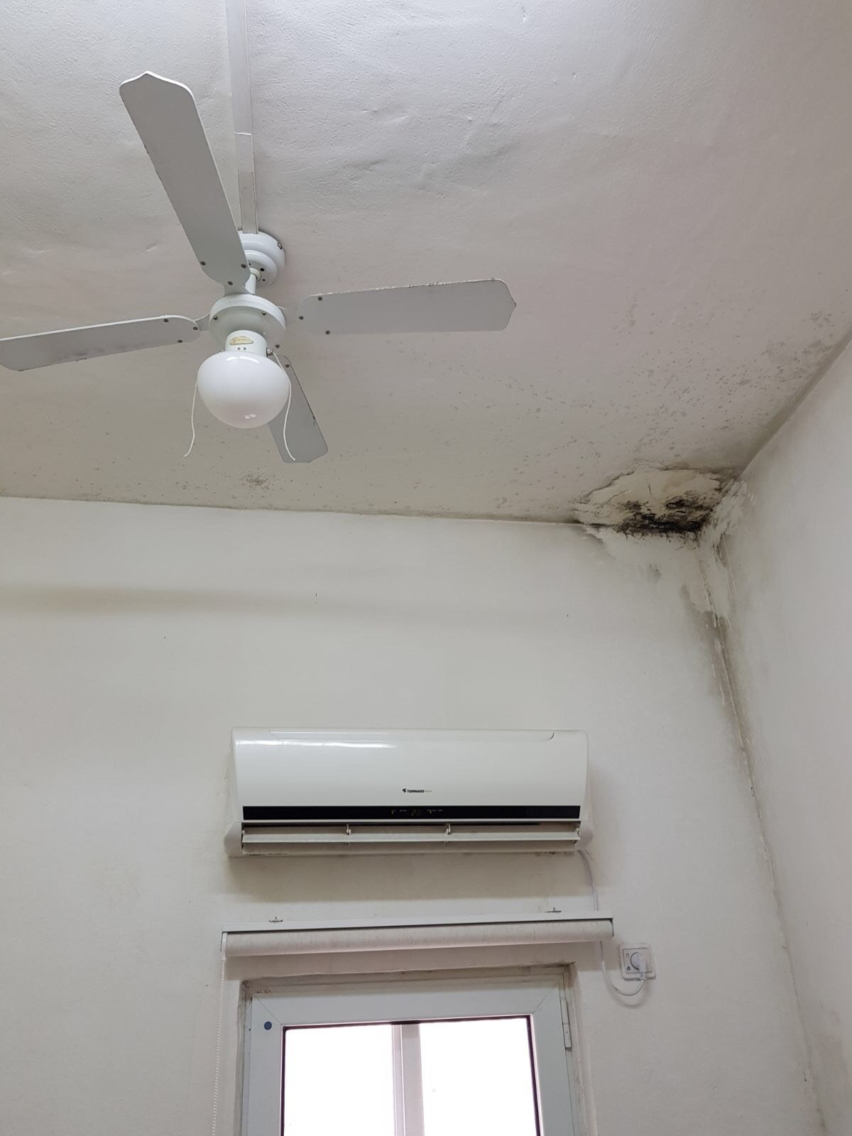 ام الفحم: فئران في مكاتب الصحيّة؟؟