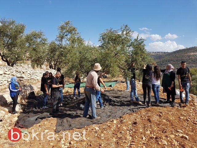 عمل تطوعي لمساعدة المزارعين في قطف الزيتون