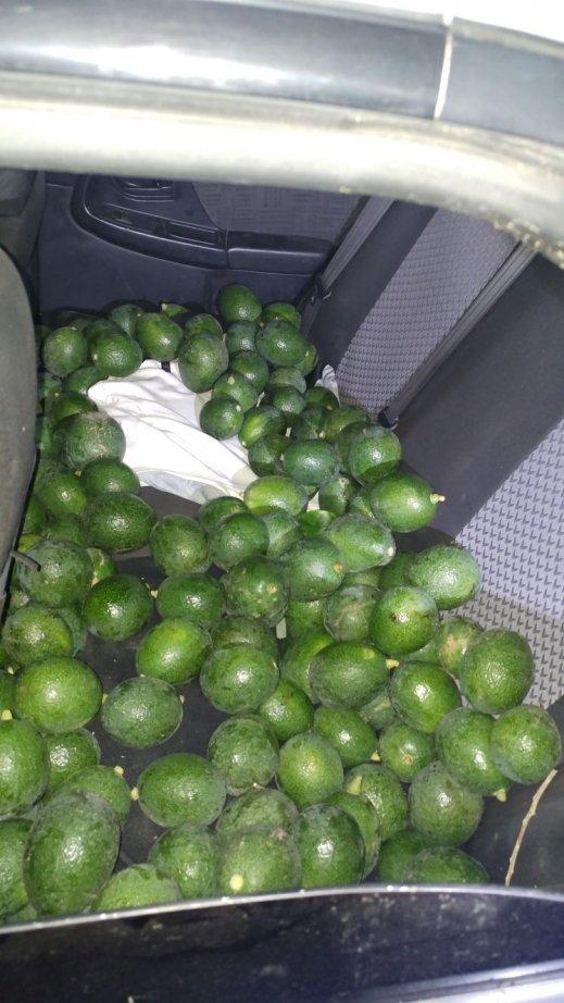 تل السبع: سرقة 300 كغم افوكادو واعتقال 5 اشخاص