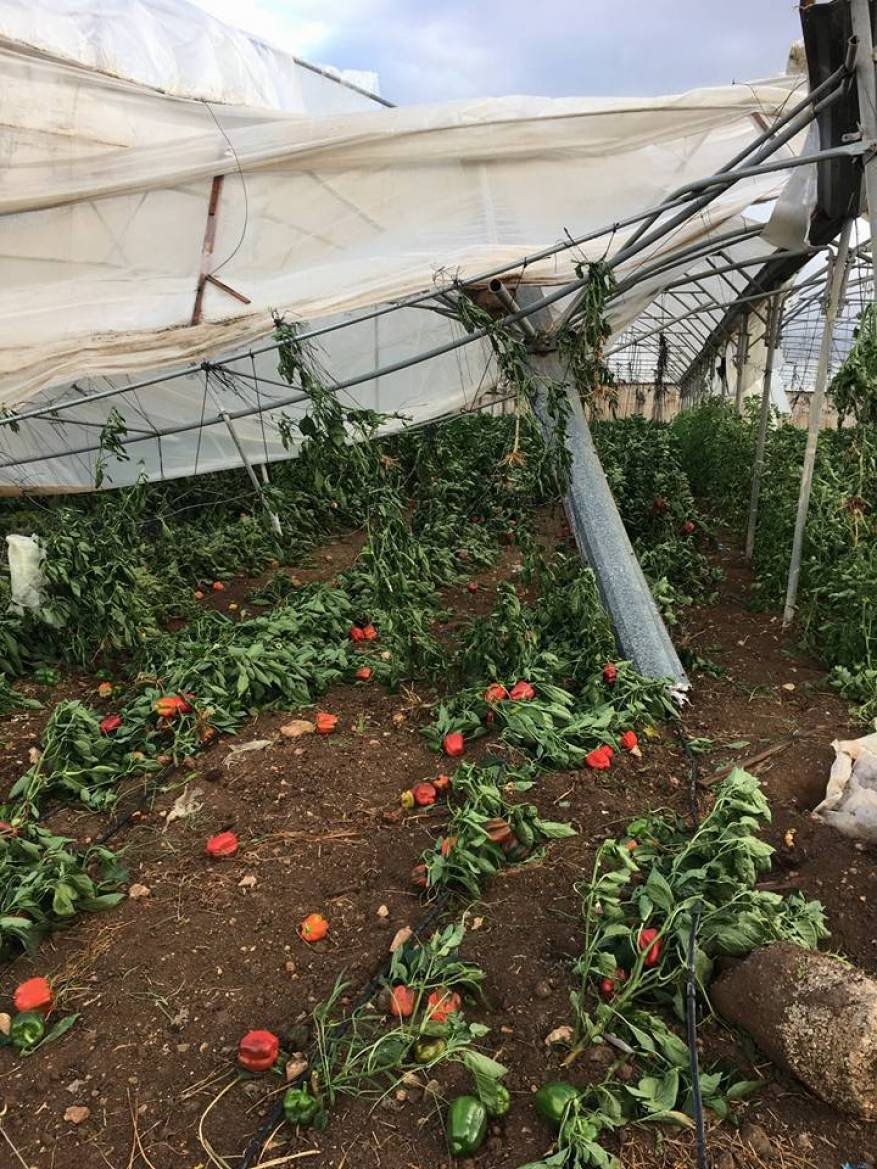 الرياح العاتية تلحق أضرارا كبيرة بمزارع المواطنين في الأغوار