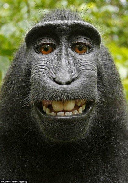 صورة لقرد نادر تغير حياة ملتقطها للأسوأ