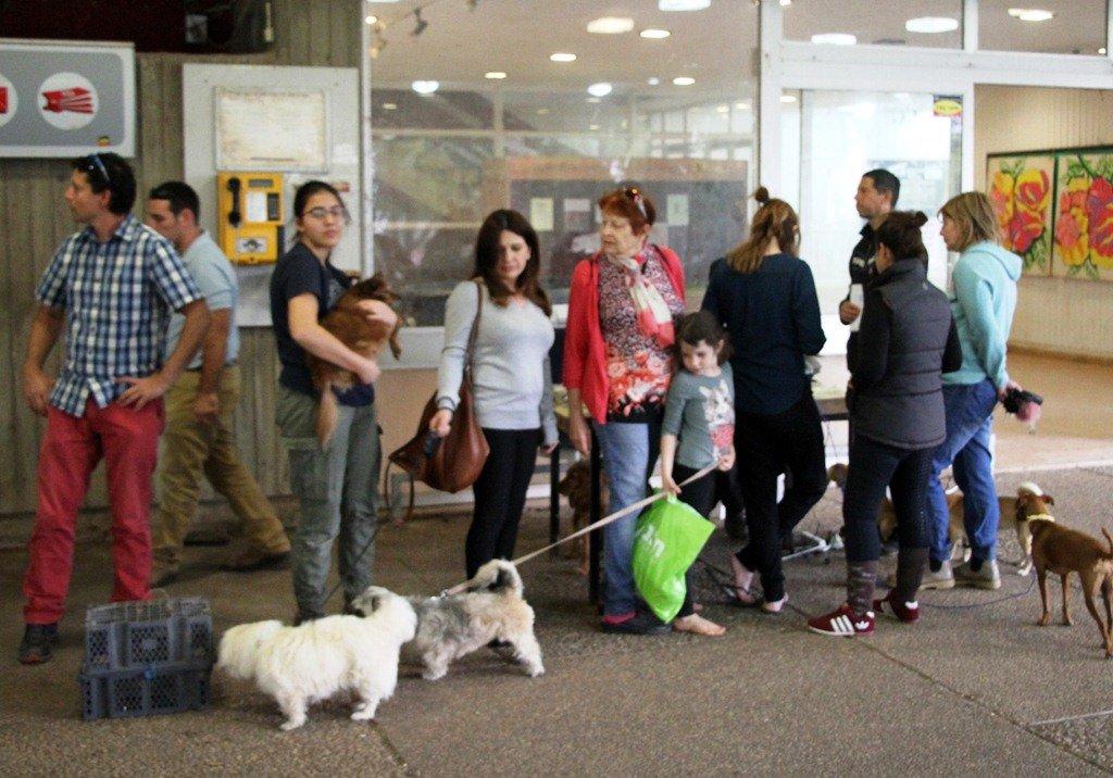 حالة الطوارئ مستمرة بالجلبوع .. اكتشاف المزيد من حالات مرض الكلب وتحذير للمواطنين