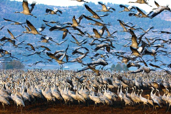 صور رائعة: الحيوانات والطيور تخرج بعد انتهاء المنخفض الجوي