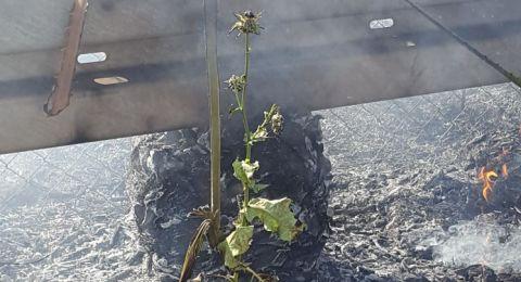 إحراق أشجار بين طمرة وكابول وضبط قاصرين مشتبهين