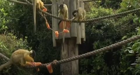 حديقة الحيوان في لندن تحارب موجة الحر بطريقة فريدة