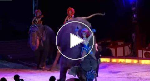 """""""فيل"""" يسقط على الجمهور في سيرك ألماني"""