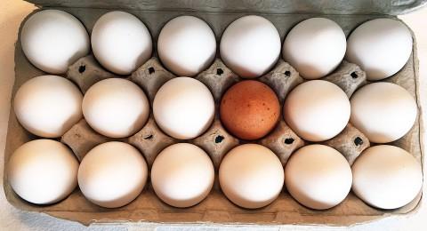 هكذا تستطيع الكشف عن طَزاجة البيض من فساده