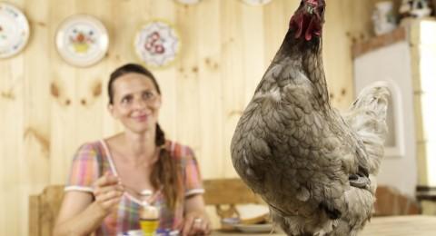 أسباب تجعلك تتناول البيض يومياً