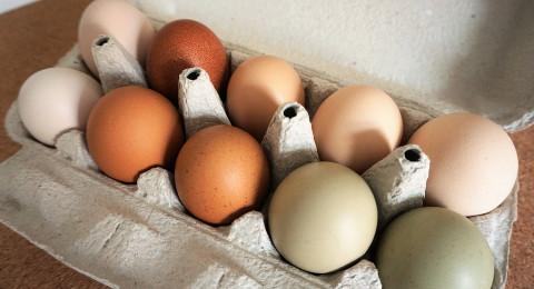 اردني يكسر كراتين كاملة من البيض على راس زوجته قبل أن يطلقها في الشارع