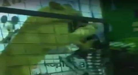 السعودية: أسد بين أطفال يخرج عن السيطرة ويهجم على طفلة