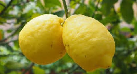 فوائد لا تصدق.. لا ترموا قشور الليمون بعد اليوم!