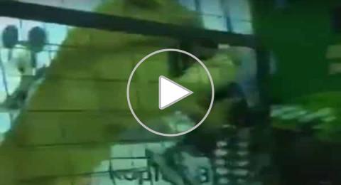 السعودية: أسد بين الأطفال يخرج عن السيطرة ويهجم على طفلة