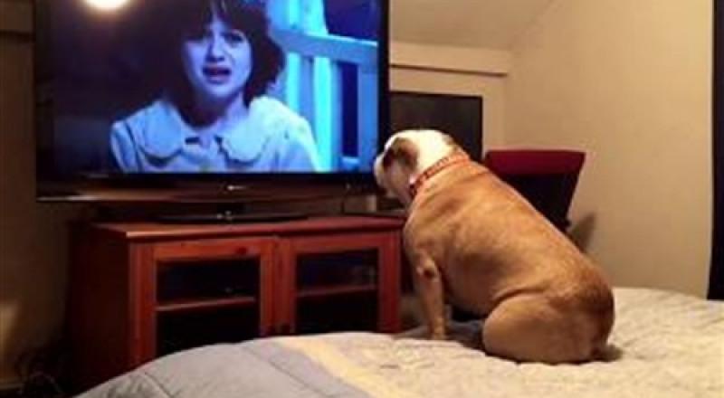 بالفيديو.. رد فعل «كلبة» تشاهد فيلم رعب عبر التليفزيون