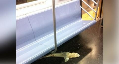 العثور على جثة سمكة قرش في مترو نيويورك