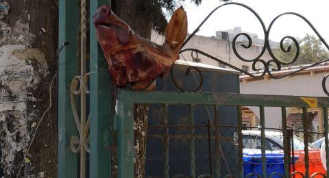 رمات هشارون: تعليق رأس خنزير بمدخل كنيس يهودي