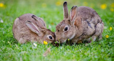 بولندا: تناسلوا مثل الأرانب