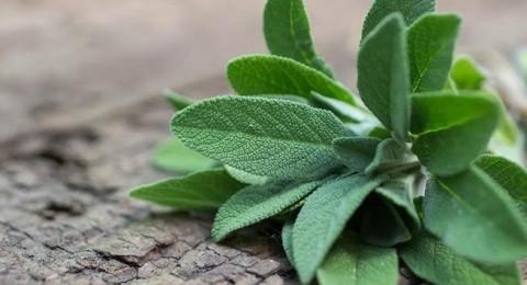 5 فوائد سحرية لعشبة الميرمية