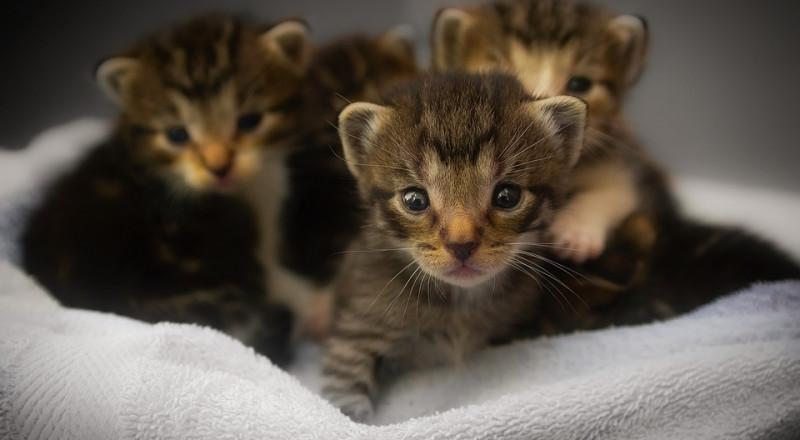 احتضان القطط الصغيرة قد يتسبب بموتك!