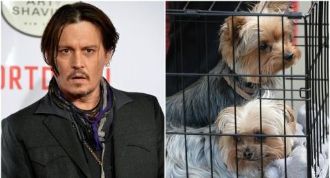 جوني ديب وزوجته مهددان بالسجن بسبب كلابهما!