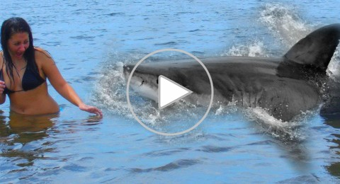 فتاتان أميركيتان تنجوان من هجوم سمكة قرش