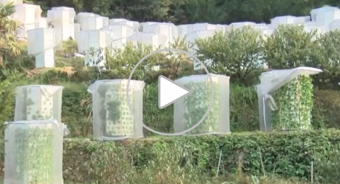 الصين تزرع الخضروات بتقنية