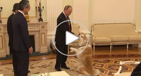 حيوانات في حديقة الرئيس الروسي بوتين