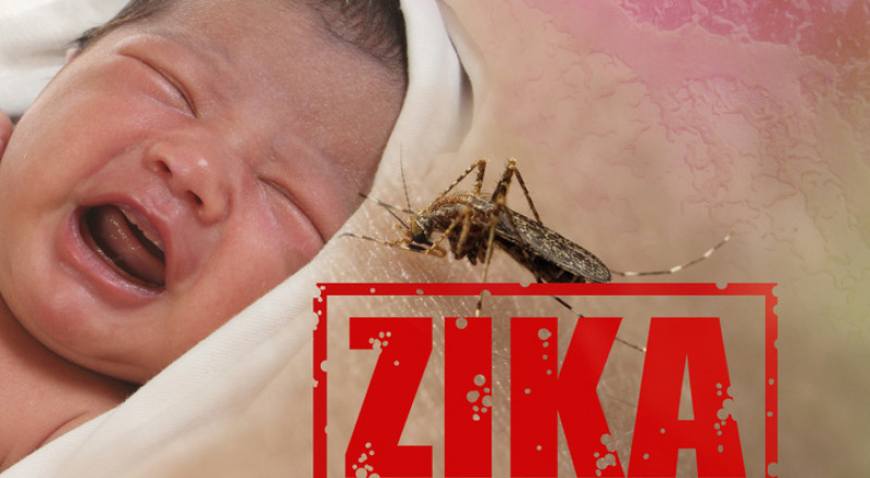 الرضع المصابون بزيكا يعانون مشاكل صحية كثيرة