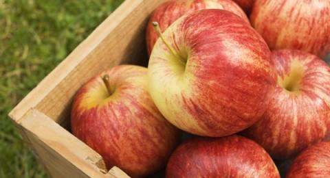 أميركا:عبوات تفاح محفوظة وراء الإصابة ببكتيريا قاتلة