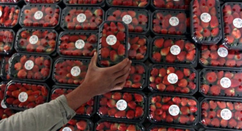 توقف تصدير الفراولة وتوقعات بانخفاض الأسعار بغزة