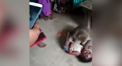 الهند: قرد يخطف طفلا من والديه ويهدد من يقترب منه!