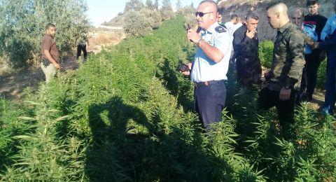 شرطة الخليل تضبط اضخم مشتل مخدرات بداخة ١١ الف شتلة بمنطقة فرش الهوى