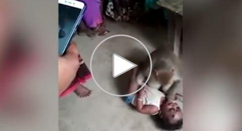 قرد يخطف طفلا من والديه ويهدد من يقترب منه!