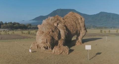 طرائف مهرجان حصاد الأرز في اليابان