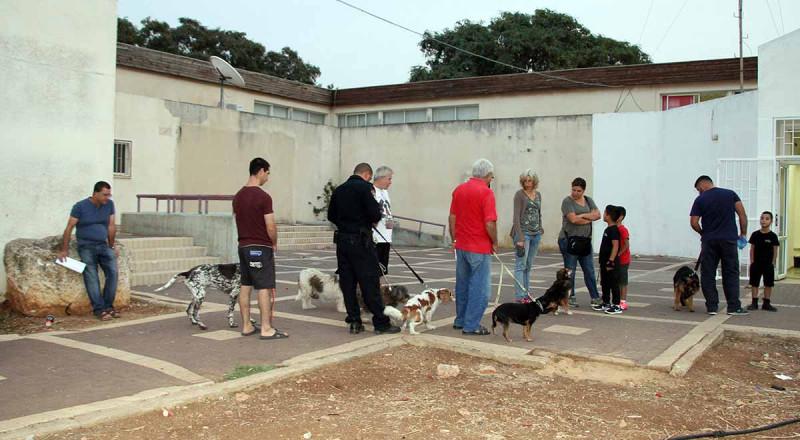 تحذير لسكان الجلبوع والمرج: احموا أنفسكم من داء الكلب المنتشر بالمنطقة