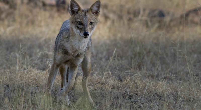بستان المرج: تحذير من انتشار داء الكلب بالمنطقة