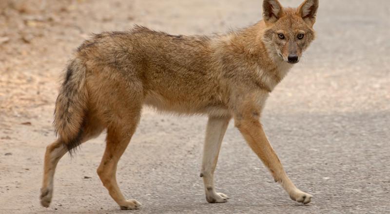 تحذير للمواطنين: 3 حالات داء الكلب في منطقة الجلبوع