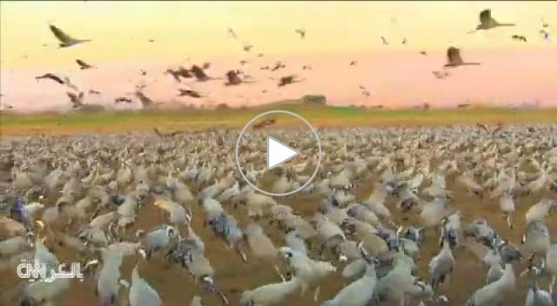 بحيرة طبريا..جنة الطيور المهاجرة