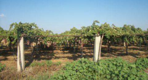 سوريا: القطاع الزراعي بدأ بالتعافي في درعا