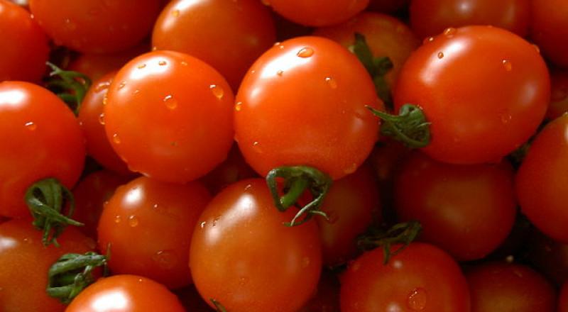 دراسة: الطماطم تكافح سرطان المعدة