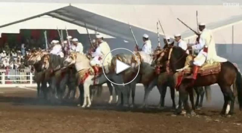 مهرجان الخيول العربية الاصيلة في المغرب
