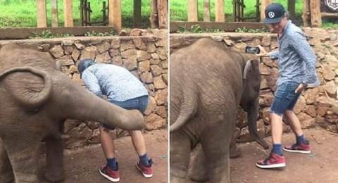 ما فعله فيل صغير بشاب حاول التقاط سيلفي معه